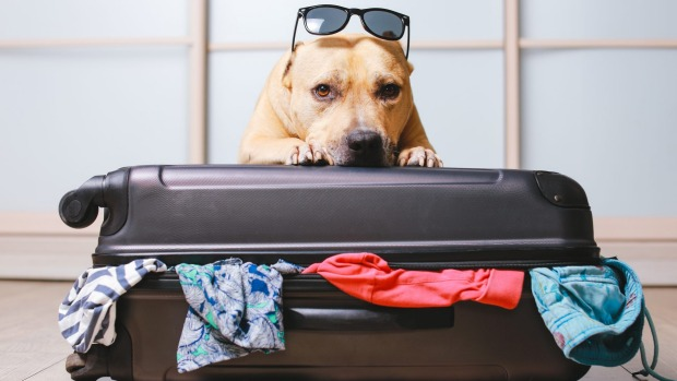 Some Instructions to find the Right Place for the Pampered Pets Holidays